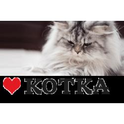 Мисли за любители на котки