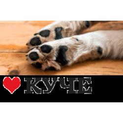 Мисли за любители на кучета