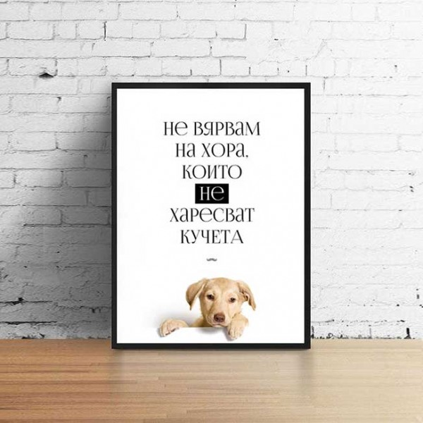 Не вярвам на хора, които не харесват кучета #лабрадор
